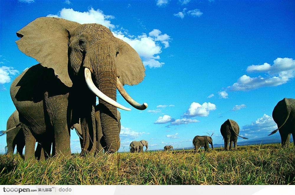 大象.jpg